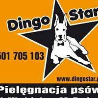 dingo star
