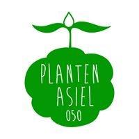 Plantenasiel  Groningen