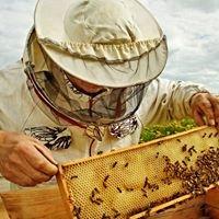 BeeKeeper.TV