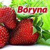 Boryna