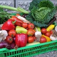 BIO zelenina zo Žiliny