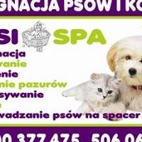 Psi Salon Cztery łapy Debica Polska
