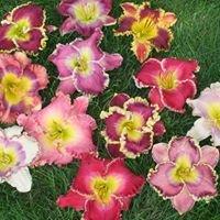 Pinewood Gardens Daylilies