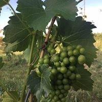 Agroturystyka Winnica Maria