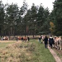 Ponyfarm Anne-Kathrin Bendix