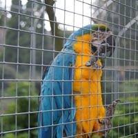 Stichting Kleindierwandelpark Hedel