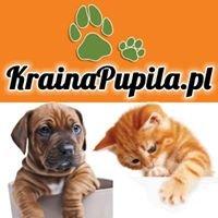 Krainapupila.pl