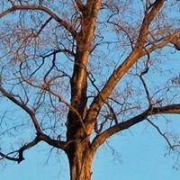 ALBERI - TREES - ARBRES