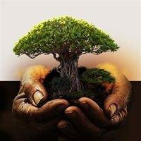 Szkółka Roślin Ozdobnych Cyprys