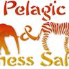 Pelagic & Wilderness Safaris