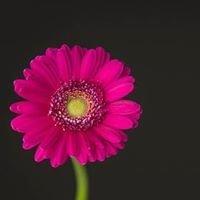 Kwiaciarnia Mysłakowice