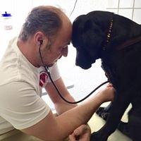Mobile Tierarztpraxis Marco Nieburg