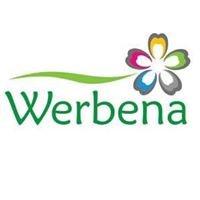 Werbena