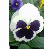 Цветята на мама