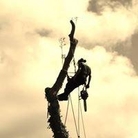 TreeWorks (West Wales) Ltd