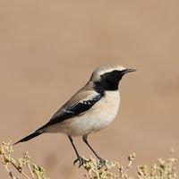 Atlas-sahara-biodiversity
