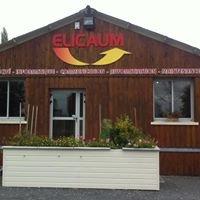 Elicaum