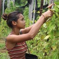 Chamkar Damnak Organic Farm