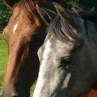 Balade à cheval Signy-le-petit 08