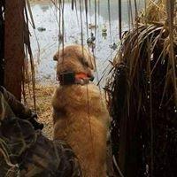 Elk Creek Gun Dogs