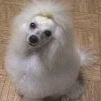 ShowStoppers Custom Dog Grooming