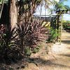 Kingscliff Nursery
