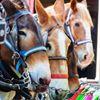 Palmetto Carriage Works & Palmetto Tours