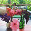 Hedonisia Hawaii Eco-Community