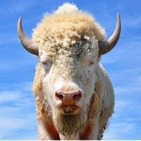 Sweetgrass Buffalo Company