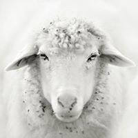 Kells Wool
