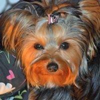 Doggy Dobbie