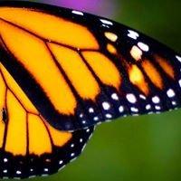 Monarch Disposal