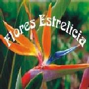 Flores Estrelicia