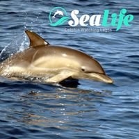 Sealife - Dolphin watching Algarve
