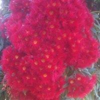 Vaughans Australian Plants Pomonal