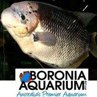 Boronia Aquarium