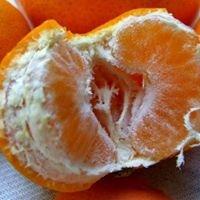 Neretvanske mandarine na Vaš kućni prag po 3 kn izravno od proizvođača