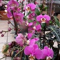 Handlbauer Blumen