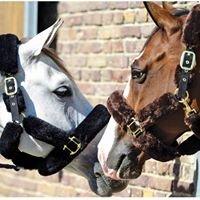 Canterbury Equestrian