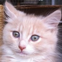 Pets and Saddles and Kats in Traumatic Times Emergency Network