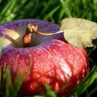 Apple Health Foods