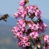 Highland BEE Supplies
