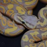Emsworth Aquaria and Reptiles