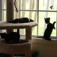 Cats of Acadiana Animal Aid