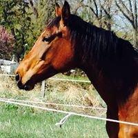 Montana Horse Sanctuary