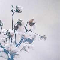 Strathmore Flowers