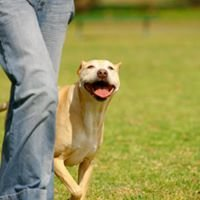 K9 Positive Works Dog Training & Behaviour Counselling