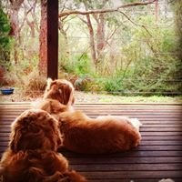 Cape Otway Cottages - Pet friendly accommodation