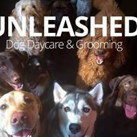 Unleashed Dog Daycare & Grooming