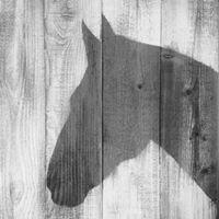 Richard Powell Jones Equine Casualty Services